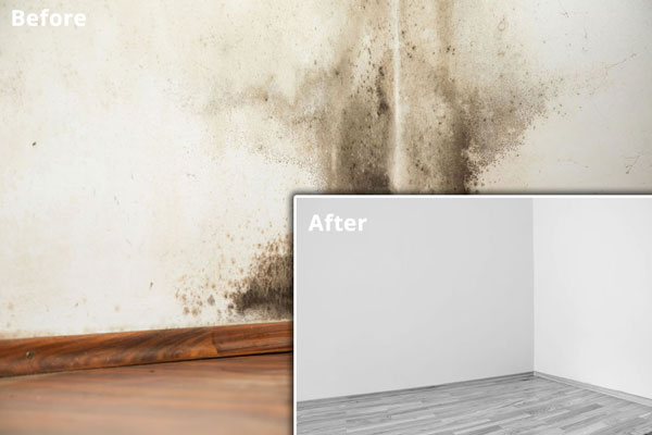 Rising Damp Before After